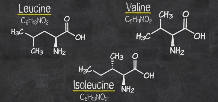 BCAA - Forgrenede aminosyrer
